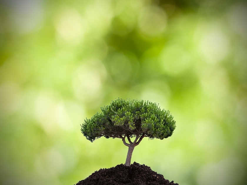 Dia Mundial do Meio Ambiente: o Planeta Terra em modo reset
