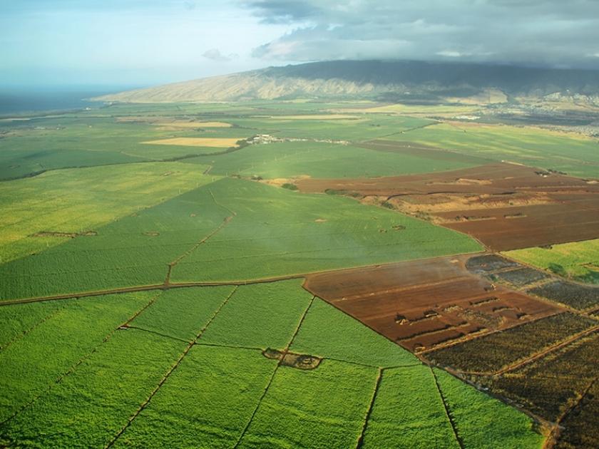 Produtores de etanol estão 'livres' com venda direta, diz representante do setor